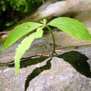 plant-rock