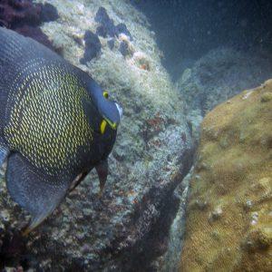 angel-fish-reef-miami